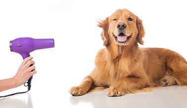 Pet Grooming - Στέγνωμα