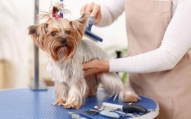 Pet Grooming - Stripping