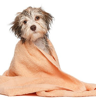 Spa Treatment - Dog in towel