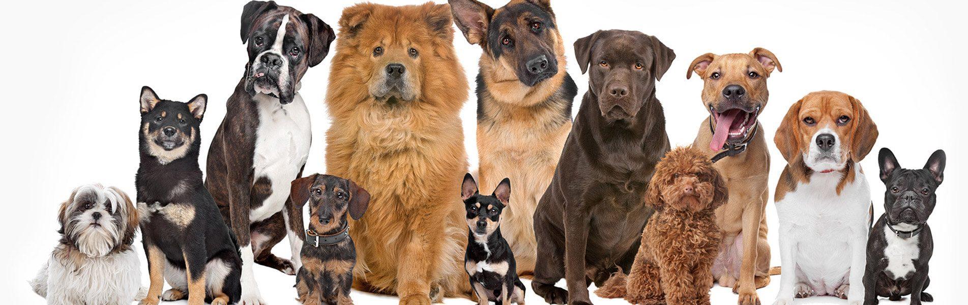Slide - Dog Family